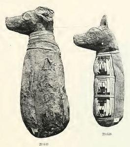 mummified dogs