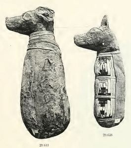 mummified dogs